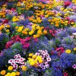 como-fazer-um-jardim
