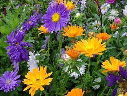 como-fazer-um-jardim-de-inverno-10