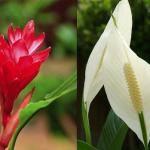 Dicas de Plantas que Ajudam a Limpar o Ar da Casa