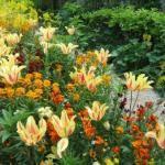 Como Fazer um Jardim – Dicas e Fotos