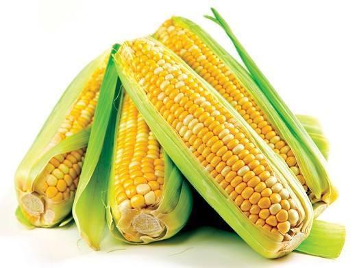 milho-verde-e-o-astro-das-festas-juninas