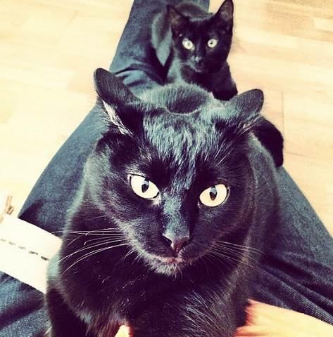daniel-arenas-gosta-de-gatos-3