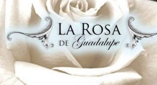 rosa de guadalupe