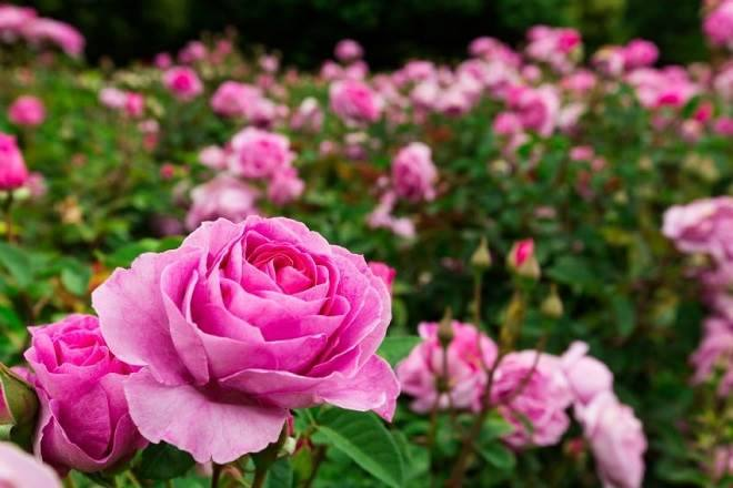 flores mais usadas na decoração de casamentos